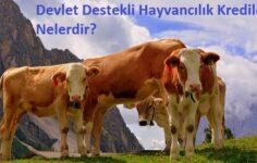 Devlet Destekli Hayvancılık Kredileri Nelerdir?