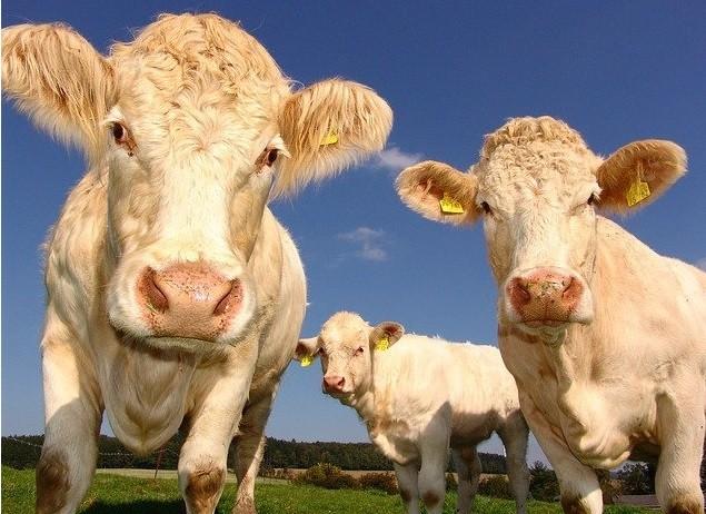 Hayvancılık Kredileri Nelerdir